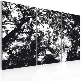 Πίνακας - Dense forest
