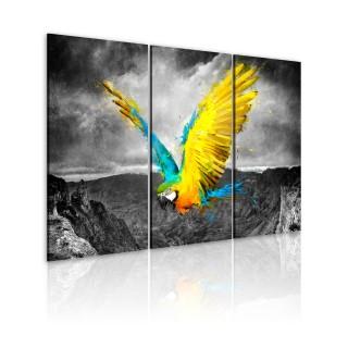 Πίνακας - Bird-of-paradise