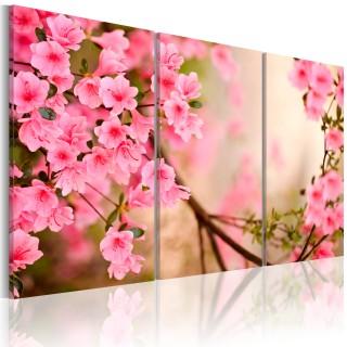Πίνακας - Cherry flower