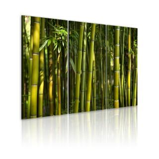 Πίνακας - Green bamboo