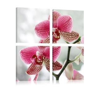 Πίνακας - Fancy orchid