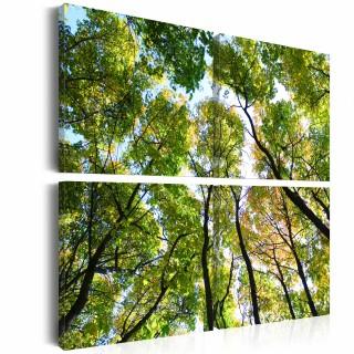 Πίνακας - Treetops