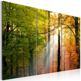Πίνακας - A calm autumn forest