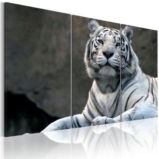 Πίνακας - White tiger