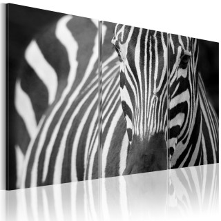 Πίνακας - Mrs. Zebra
