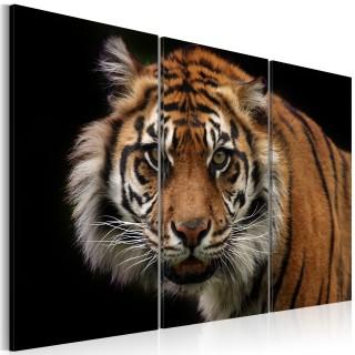 Πίνακας - A wild tiger