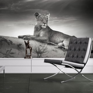 Φωτοταπετσαρία - Black and white lioness