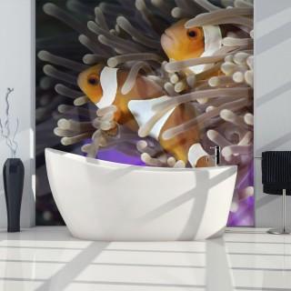 Φωτοταπετσαρία - Clownfish