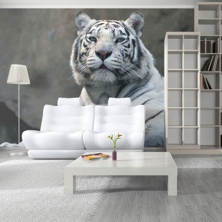 Φωτοταπετσαρία - Bengali tiger in zoo