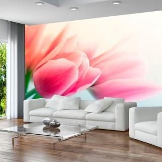 Φωτοταπετσαρία - Spring and tulips