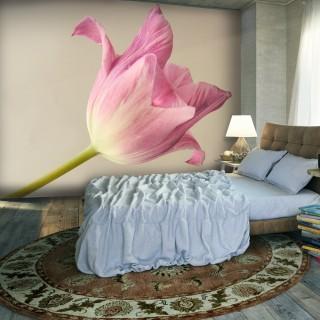 Φωτοταπετσαρία - Pink tulip