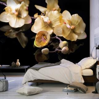 Φωτοταπετσαρία - Orchids in ecru color