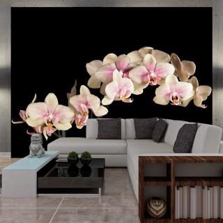 Φωτοταπετσαρία - Blooming orchid