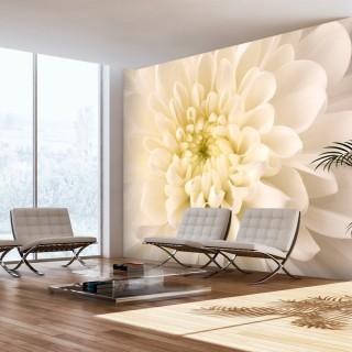 Φωτοταπετσαρία - White dahlia