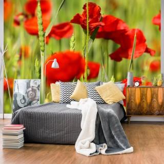 Φωτοταπετσαρία - Cereal field with poppies