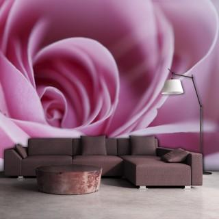 Φωτοταπετσαρία - Pink rose
