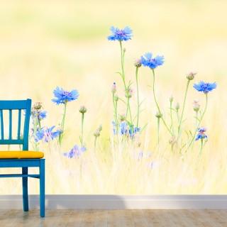 Φωτοταπετσαρία - Cornflowers