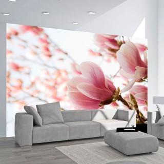 Φωτοταπετσαρία - Pink magnolia