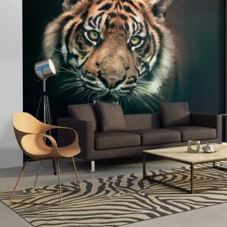 Φωτοταπετσαρία - Bengal Tiger