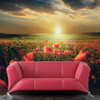 Φωτοταπετσαρία - Morning on the poppy meadow