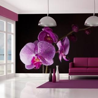 Φωτοταπετσαρία - stylish  orchis