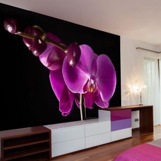 Φωτοταπετσαρία - elegant  orchis