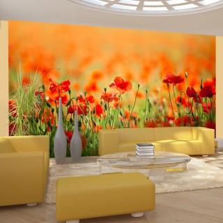 Φωτοταπετσαρία - Poppies in shiny summer day