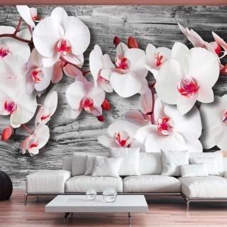Φωτοταπετσαρία - Callous orchids