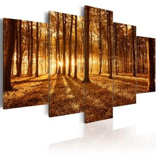 Πίνακας - Amber forest