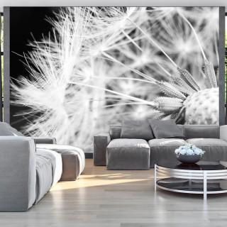 Φωτοταπετσαρία - Black and white dandelion