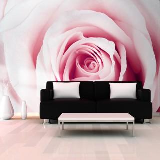 Φωτοταπετσαρία - Rose maze
