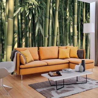 Φωτοταπετσαρία - Bamboo Exotic