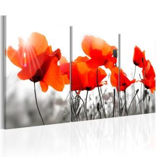 Πίνακας - Charming Poppies