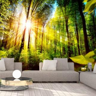 Φωτοταπετσαρία - Forest Hideout