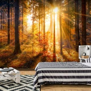 Αυτοκόλλητη φωτοταπετσαρία - Autumn Awakening