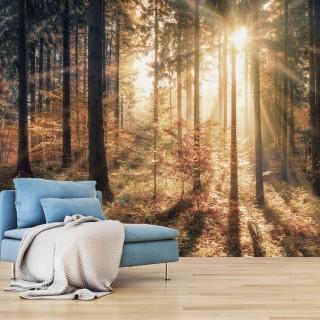 Αυτοκόλλητη φωτοταπετσαρία - Autumnal Forest