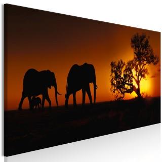 Πίνακας - Elephant Family (Orange)