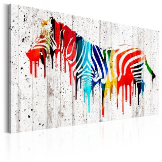 Πίνακας - Colourful Zebra