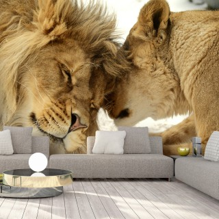 Αυτοκόλλητη φωτοταπετσαρία - Lion Tenderness