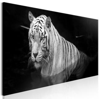Πίνακας - Shining Tiger (1 Part) Black and White Narrow