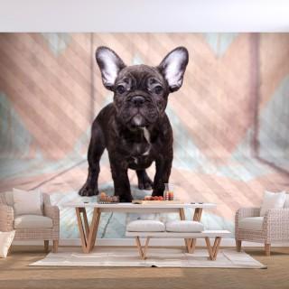 Φωτοταπετσαρία - French Bulldog