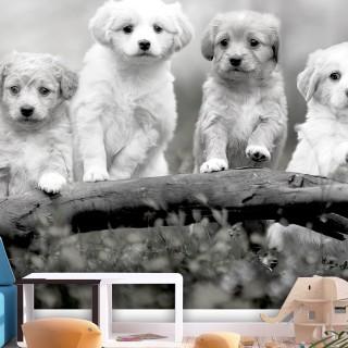 Φωτοταπετσαρία - Four Puppies