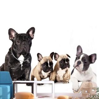 Φωτοταπετσαρία - French Dogs
