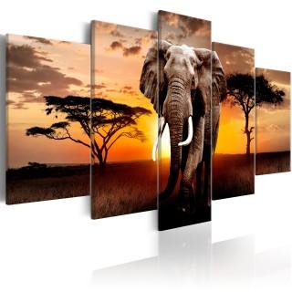 Πίνακας - Elephant Migration