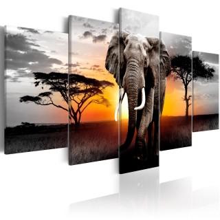 Πίνακας - Elephant at Sunset