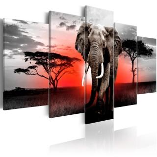 Πίνακας - Lonely Elephant
