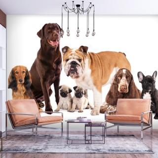 Φωτοταπετσαρία - Dog Integration