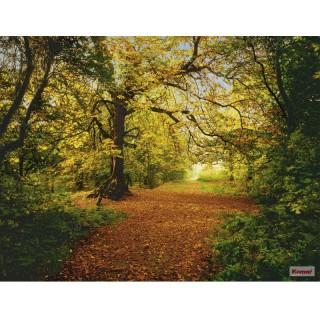 Φωτοταπετσαρία τοίχου Komar 8-068 Autumn Forest 3.88 cm x 2.70 cm