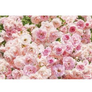 Φωτοταπετσαρία τοίχου Komar 8-937 Rosa 3.68 cm x 2.54 cm