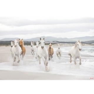 Φωτοταπετσαρία τοίχου Komar 8-986 White Horses 3.68 cm x 2.54 cm